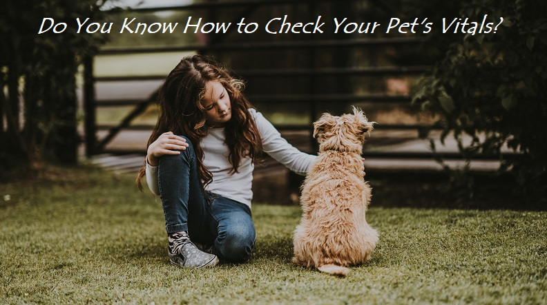 How to check your pet's vitals