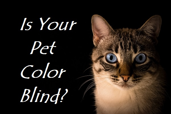 Is your pet color blind?