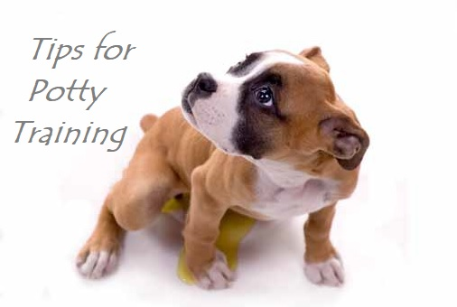 Tips for potty training your dog